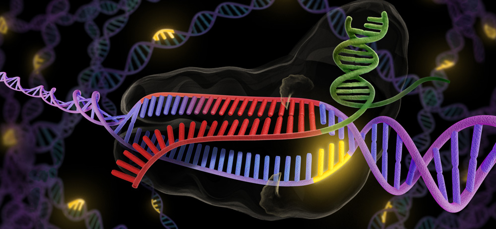 Genome editing with CRISPR-Cas