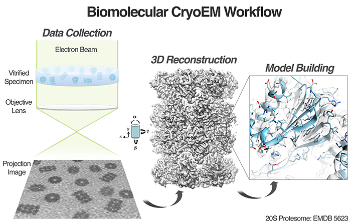Biomolecular CryoEM workflow